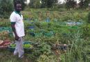 Culture hors sol au Burkina Faso : La technique agricole aux multiples avantages