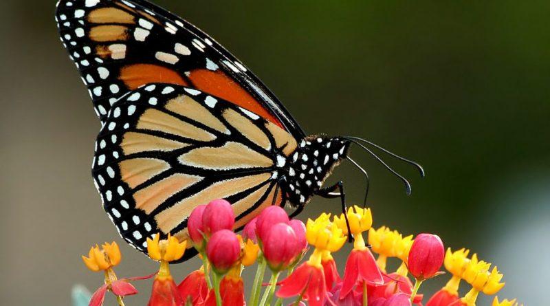 Le papillon de Mamadou