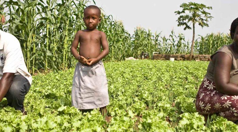 Appel à projets pour la Promotion de l'agriculture familiale en Afrique de l'Ouest de la Fondation de France et du CFSI