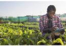 SimulAgri Togo : Une application ludique et pédagogique pour accroitre le business agricole des jeunes togolais