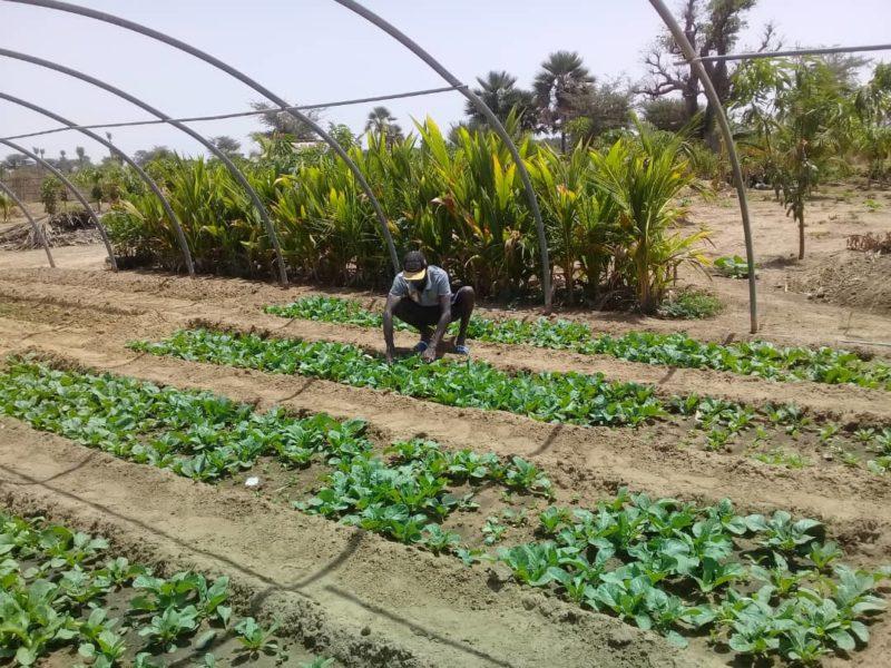 Un écolier fermier en apprentissage