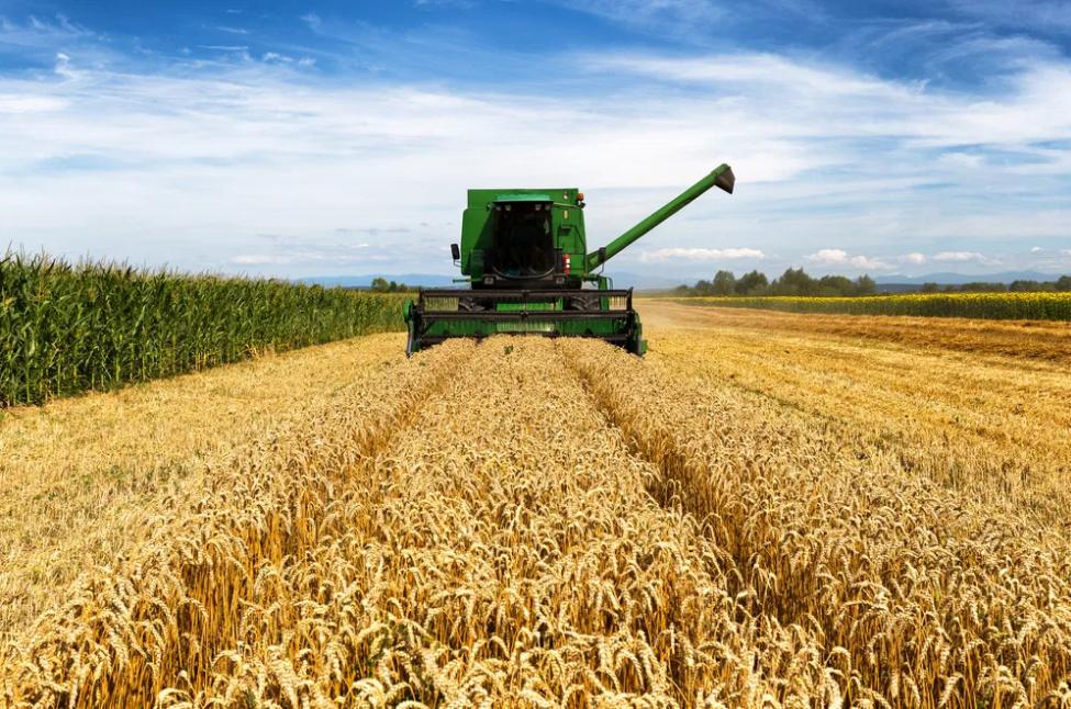 Culture de céréales dans le monde