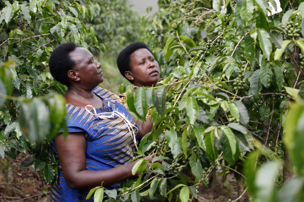 Epiphanie dans sa plantation de café