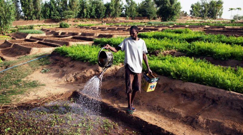 Agriculture. CP: Mali